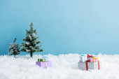 presents on white snow near christmas trees isolated on blue