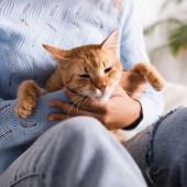 Oříznutý pohled na ženu ve svetru drží zázvorovou kočku
