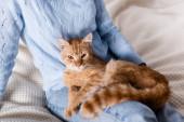Oříznutý pohled na kočku sedící na posteli