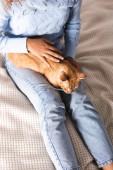 Magas szög kilátás a nő simogató gyömbér macska az ágyban