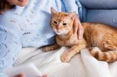 Selektivní zaměření ženy pomocí smartphonu a dotýkání tabby kočka na posteli