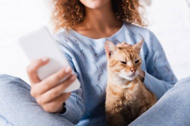 Cropped view of woman stroking tabby cat while using smartphone stock vector