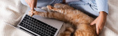 Photo Panoramic shot of woman touching paw of cat near laptop on bed