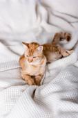 Selektivní zaměření tabby cat ležící na posteli doma