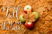 Blick von oben auf reife leckere Äpfel und herbstliches Laub im Herbst liegt in der Luft Schriftzug