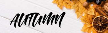 Top view of decoration with grapes and leaves near autumn lettering on white background, panoramic crop stock vector