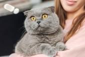vágott lövés mosolygó fiatal nő gazdaság aranyos kiscicák macska