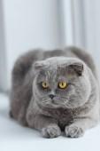 közeli lövés kiscicák macska pihentető ablakpárkányon