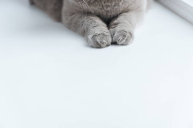 cropped shot of grey cat lying on white surface