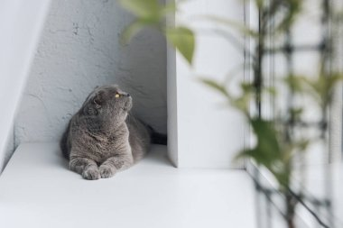 cute grey cat lying on windowsill and looking up