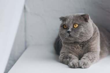 close-up shot of cute grey cat lying on windowsill and looking away