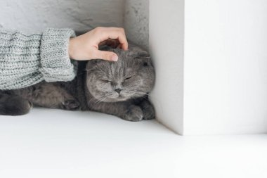 Cropped shot of girl in sweater petting grey cat while he sleeping on windowsill stock vector