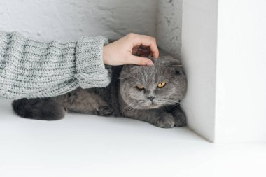 Cropped shot of girl petting grey cat while he sleeping on windowsill stock vector