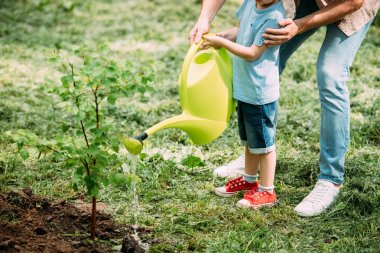 cropped image of father and son watering seedling with watering can at park