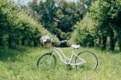 Fotografia fuoco selettivo del retro bicicletta con cestino di vimini pieno di fiori alla campagna