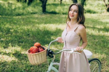pretty smiling woman in dress holding retro bicycle with wicker basket full of ripe apples at countryside