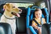 entzückender Kleinkind-Junge im Sicherheitssitz mit Labrador-Hund