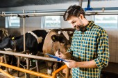 handsome farmer checking cows in stable and writing something to clipboard