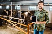 Fotografia bello sorridente tablet di visualizzando agricoltore con schermo vuoto nella stalla con le mucche