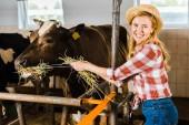 Fotografie lächelnd attraktive Bauer Kühe füttern mit Heu im Stall
