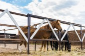 Photo beautiful horses standing behind fences on ranch