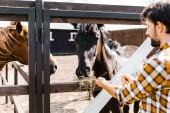 Photo handsome farmer feeding horses with hay in stable