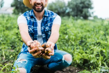 cropped image of farmer showing ripe potatoes in hands in field