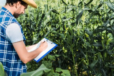 side view of handsome farmer checking harvest with clipboard in field at farm