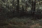 vista della struttura di foresta verde scuro