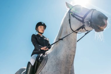 low angle view of attractive female equestrian riding horse against blue sky