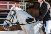 oříznutý obraz mužské jezdeckých koních a palming koně koně klubu