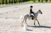 Fotografie boční pohled hezký mužský jezdecké jezdecké bílý kůň na ranči