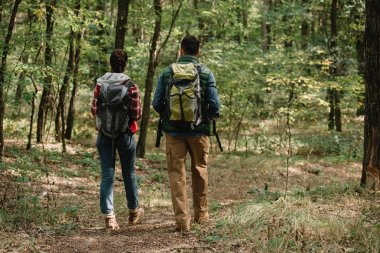 back view of couple of travelers with backpacks hiking in forest