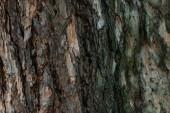 Detailní pohled popraskané hnědé strom kůra pozadí