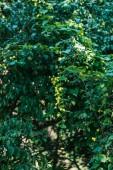 Fotografie krásné bush se zelenými listy a malé kvetoucí květiny