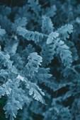 Fotografie close-up view of beautiful juniper, full frame natural natural