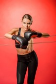 Photo attractive boxer with boxing gloves leaning on ropes and looking at camera isolated on red