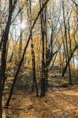 krásná podzimní les s žluté stromy na slunečný den