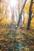 malebný pohled krásného podzimního lesa s žluté stromy na slunečný den