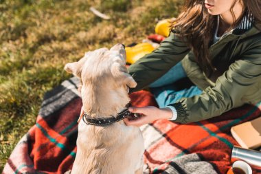 partial view of woman sitting on blanket and adjusting dog collar on golden retriever in park