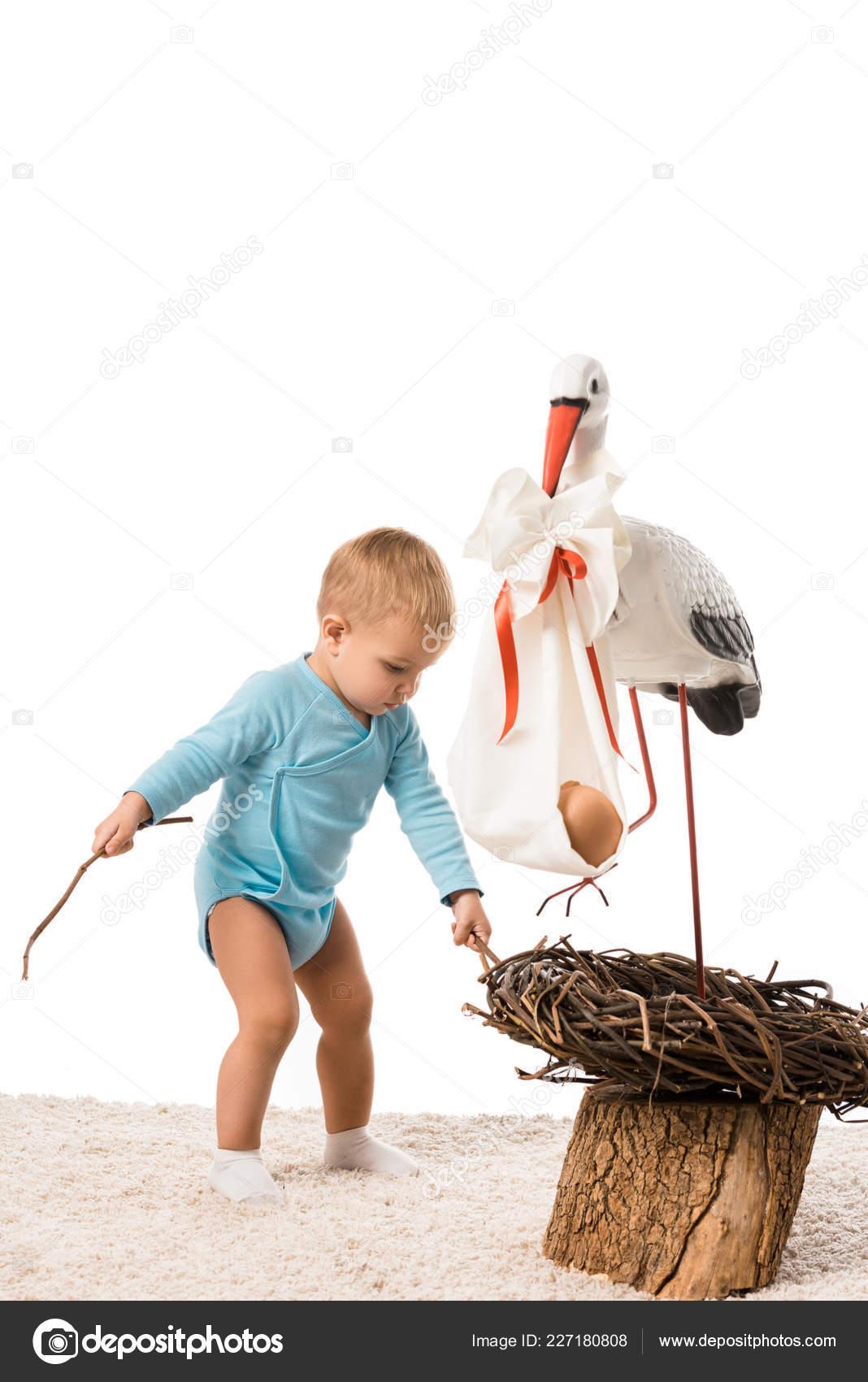Mezirasové velké ptáky