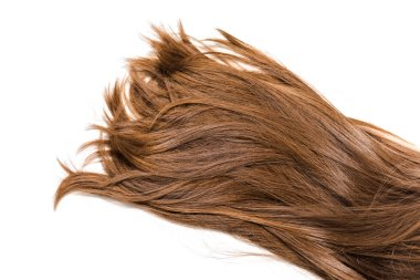 cropped view of long brown female hair isolated on white