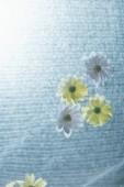 Fotografie zblízka bílých a žlutých květin na vodě se slunečním