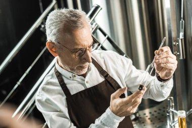 senior male brewer examining beer in flask in brewery