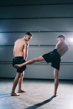 strong muscular shirtless mma fighter practicing low kick with another sportsman