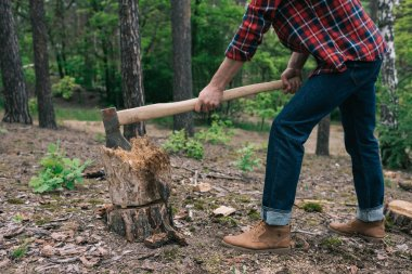 cropped view of lumberjack in plaid shirt and denim jeans cutting wood with ax in forest