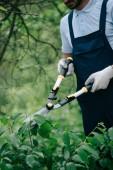 oříznutý pohled na zahradníka v přeřezávání keřů s sekačem v parku