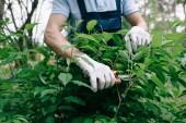 oříznutý pohled na zahradníka v rukavicích prosekávání křovin s nůžkami na zahradě