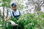 kladný zahradník v ochranných skleničkách a v křovinách s zastřihovačem v parku