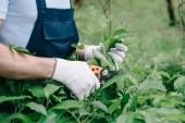 partial view of gardener in gloves trimming bush with pruner in garden